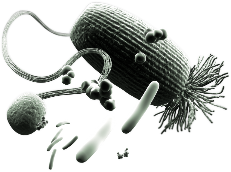 Image microflore rumen